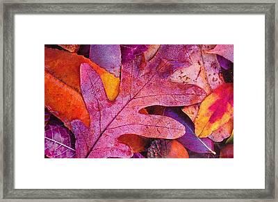 Leaves Framed Print by Anne-Elizabeth Whiteway
