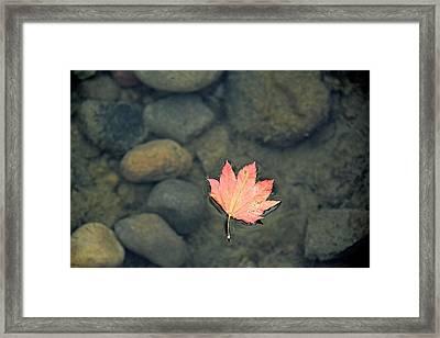 Leaves Are Falling Framed Print by Rachel Cash