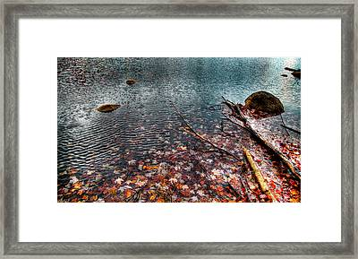 Leaves In The Lake Framed Print by David Patterson