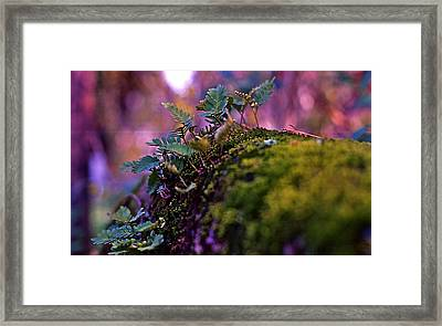Leaves On A Log Framed Print by Bellesouth Studio