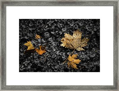 Leaves On Forest Floor Framed Print by Tom Mc Nemar