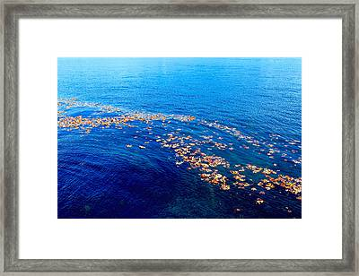 Leaves On The Ocean Framed Print by Sharon Talson