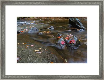 Leaves On The River Path Framed Print by Andres Leon