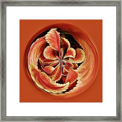 Leaves Orb Framed Print by Paulette Thomas