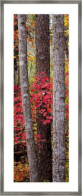 Leaves Through Trees Framed Print by Nathaniel Kidd