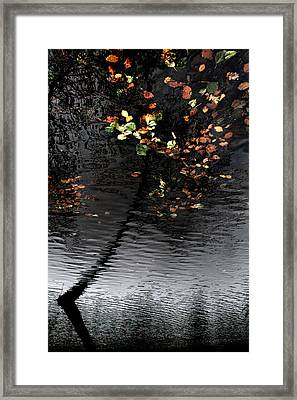 Leaves Unfallen Framed Print by Daniel Zrno