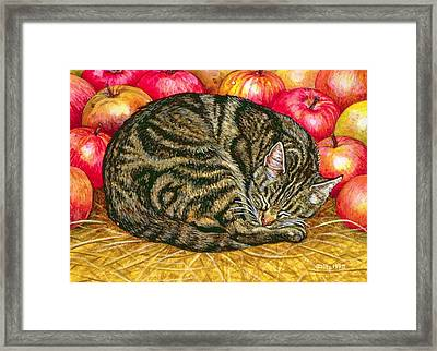 Left Hand Apple Cat Framed Print by Ditz