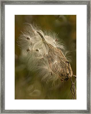 Left To The Wind Framed Print by Jack Zulli