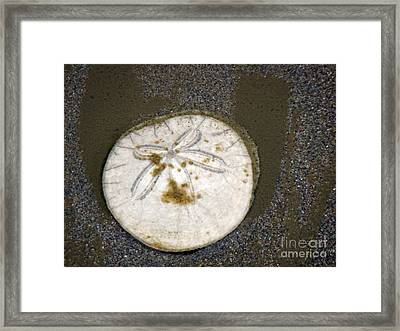 Legend Of The Sand Dollar Framed Print by Beverly Guilliams