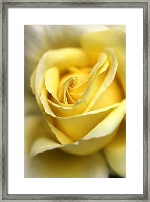 Lemon Lush Framed Print by Joy Watson