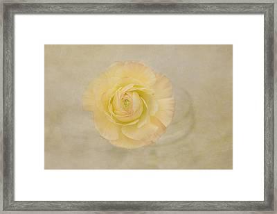 Lemon Pastels Framed Print by Kim Hojnacki