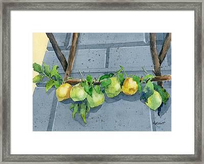 Lemon Swag Framed Print by Marsha Elliott