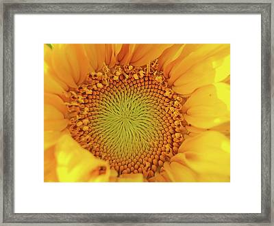 Lemon Framed Print by Tom Druin