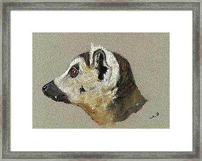 Lemur Head Study Framed Print by Juan  Bosco