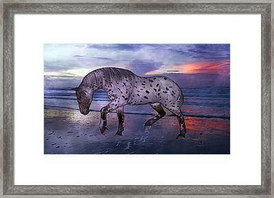 Leopard Appaloosa Framed Print by Betsy C Knapp