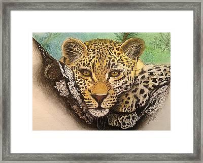 Leopard In A Tree I. Framed Print by Paula Steffensen