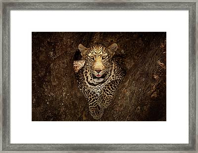 Camouflage Framed Print featuring the photograph Leopard Resting On A Tree At Masai Mara by Ozkan Ozmen Photography