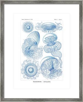 Leptomedusae Framed Print by Ernst Haeckel