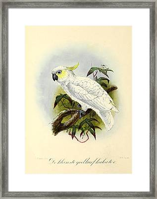 Lesser Cockatoo Framed Print by J G Keulemans