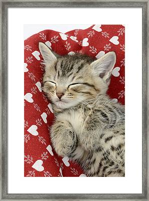Let Me Sleep Framed Print by Greg Cuddiford