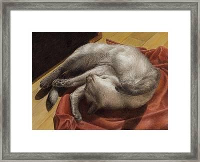 Let Sleeping Kitties Lie Framed Print by Pat Erickson