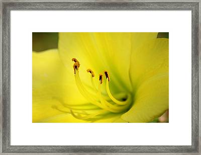 Let Us Open Our Leaves Like A Flower And Be Passive And Receptive Framed Print by Shweta Singh