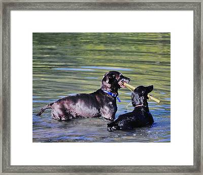 Let's Play In The River Framed Print by Kristina Deane