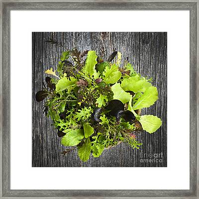 Lettuce Seedlings Framed Print by Elena Elisseeva