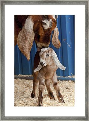Licked Clean Framed Print by Caitlyn  Grasso