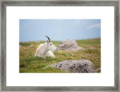 Lie Down In Green Pastures Framed Print by Jim Garrison