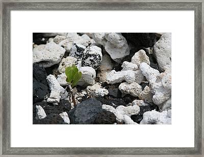 Life After Death Framed Print by Jennifer Apffel
