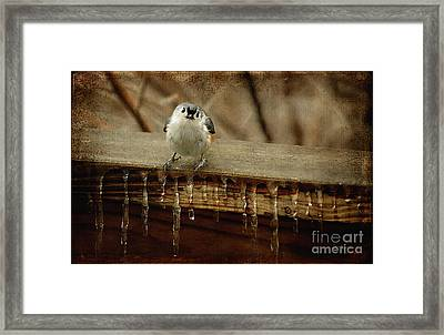 Life Can Be Tough Framed Print by Lois Bryan