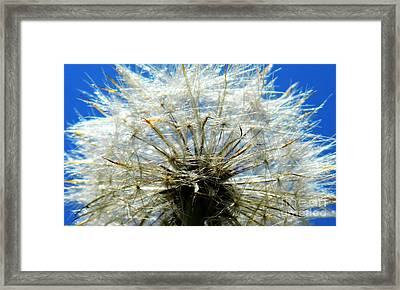 Life In Details Framed Print by Andrea Anderegg