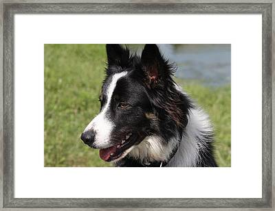 Life Is To Be Enjoyed... Framed Print by Vadim Levin