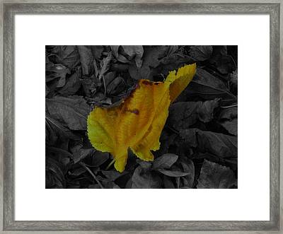 Life Framed Print by K Marshall