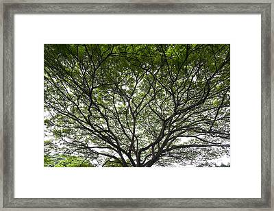 Tree Of Life Framed Print by Sean Davey