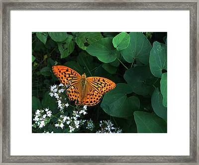 Life Framed Print by Lucy D