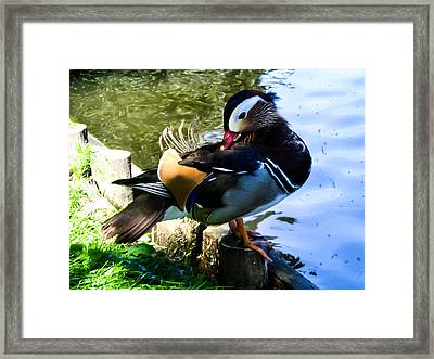 Life Of Duck IIi Framed Print by Nathalie Hope