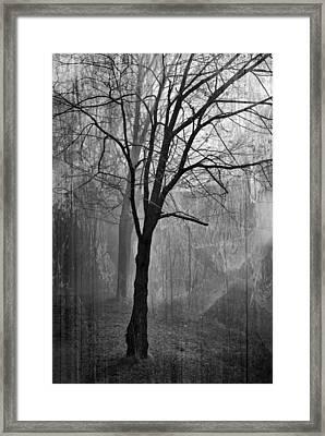 Lifeless Fog Framed Print by Melissa Smith