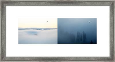 Light And Dark Framed Print by Lisa Knechtel