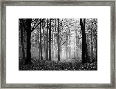 Light And Shadow Framed Print by Anne Gilbert