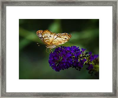 Light Beneath My Wings  Framed Print by Saija  Lehtonen