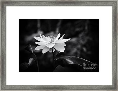 Light In Dark Spaces Framed Print by Tim Gainey