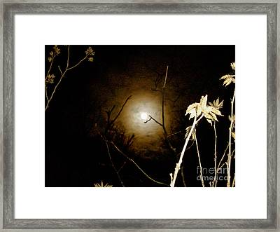 Light In The Dark Framed Print by Randi Shenkman