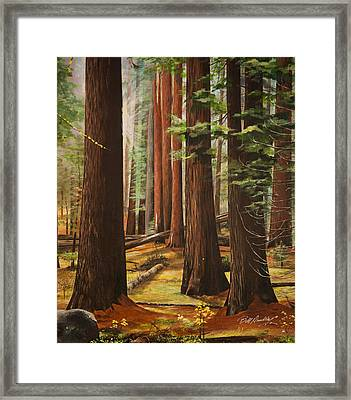 Light In The Forest Framed Print by Bill Dunkley