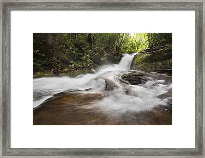 Light In The Forest Framed Print by Debra and Dave Vanderlaan