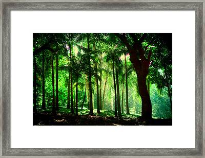 Light In The Jungles. Viridian Greens. Mauritius Framed Print by Jenny Rainbow