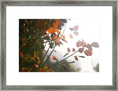 Light Framed Print by Lucy D