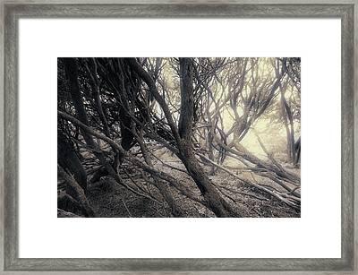 Light Mood Framed Print by Wayne Sherriff