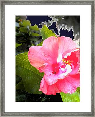 Lighted Flower Framed Print by Maureen Kyle